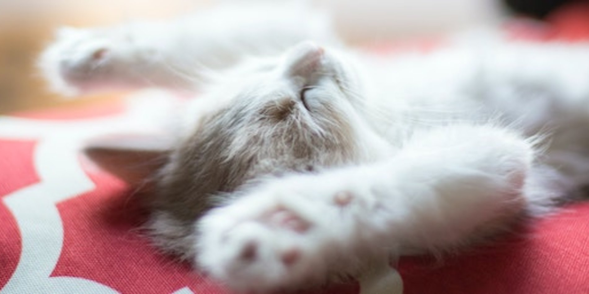 Kitten sleeping banner